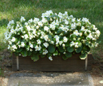 24in-planter-box-summer