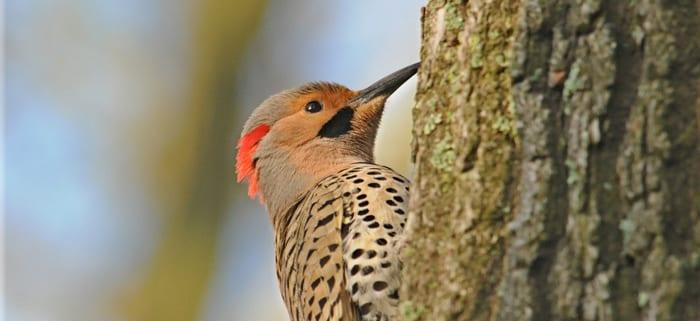 Birds-of-Swan-Point-049
