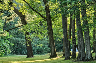 about-green-natural-burial-trees